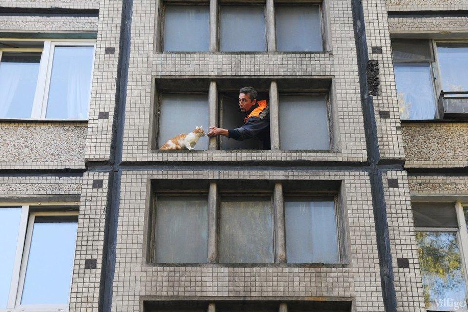 Кота за хвост: Как МЧС спасает кошек. Изображение № 13.
