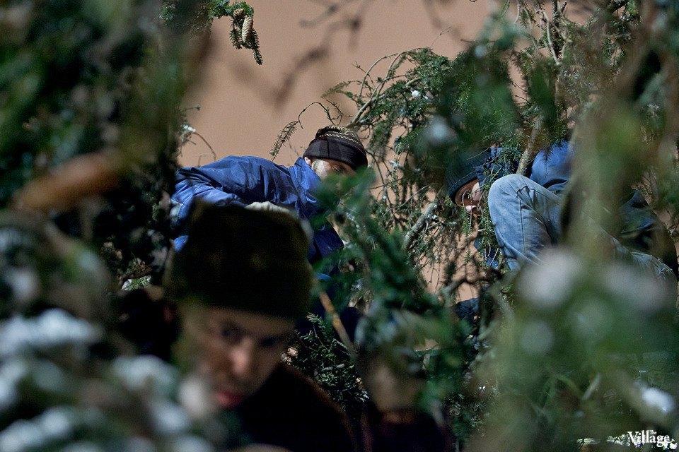 Фоторепортаж: Как устанавливали главную петербургскую ёлку. Изображение № 26.