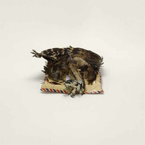 «Контрабанду» Тарин Саймон снимала пять суток напролет в отделении американской таможни, зафиксировав на фото больше тысячи обычных объектов, вроде еды и лекарств, и экзотических, вроде трупов животных или коровьих копыт.. Изображение № 11.