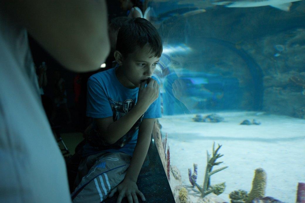 «Главные здесь — косатки, но самые милые — моржи»: На ВДНХ открылся океанариум. Изображение № 3.