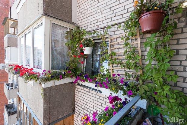 Где посадки: Что горожане выращивают на балконах иподоконниках. Изображение №52.
