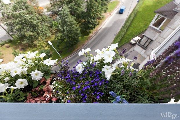 Где посадки: Что горожане выращивают на балконах иподоконниках. Изображение № 2.