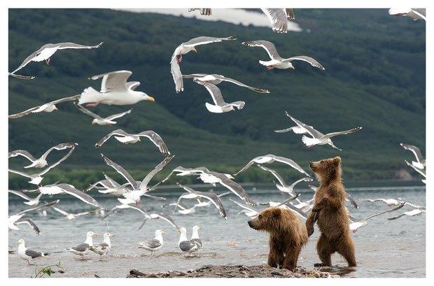 В Летнем саду выставят фотографии диких животных. Изображение № 5.