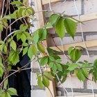 Где посадки: Что горожане выращивают на балконах иподоконниках. Изображение №62.