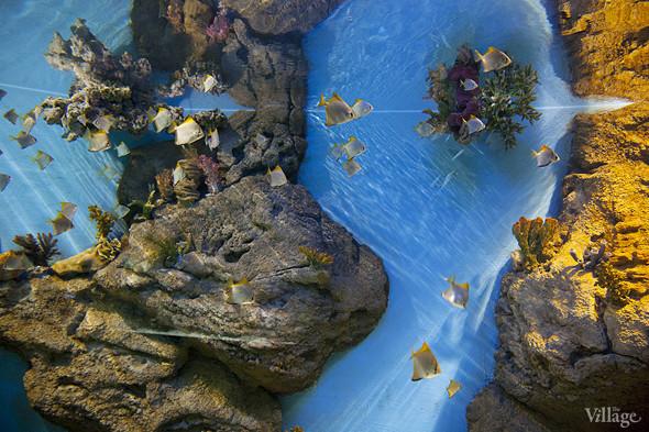 Первый океанариум открылся в Москве. Изображение № 13.