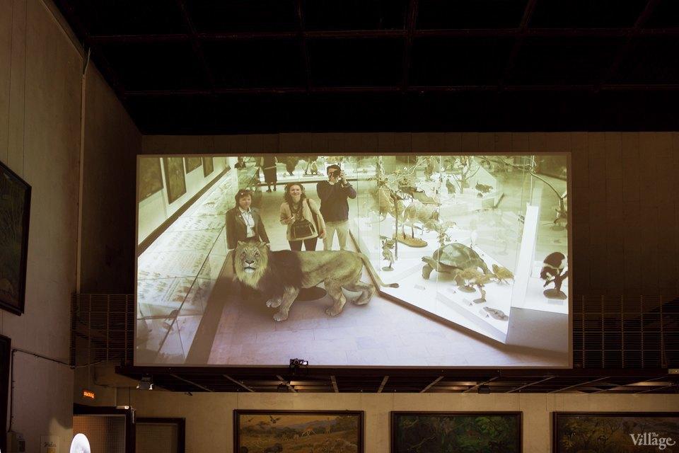 Перемены в Дарвиновском музее: «Можно бегать, прыгать и шуметь». Изображение № 14.