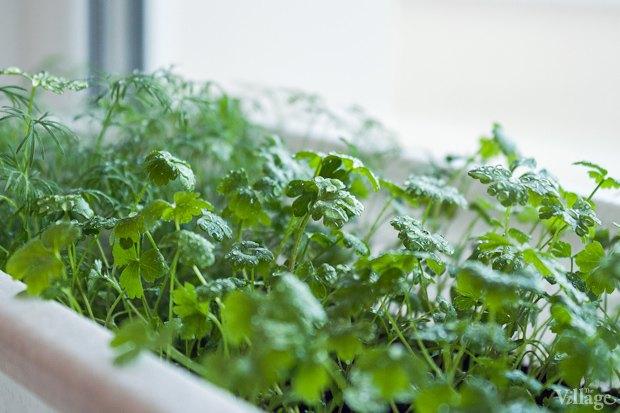 Сделай сад: Что киевляне выращивают у себя на балконах. Зображення № 42.