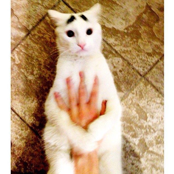 Лучшие страницы Instagram с животными: Часть 2. Изображение № 6.