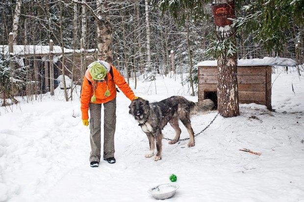 Личный опыт: Что делать, если вы нашли собаку. Изображение № 5.