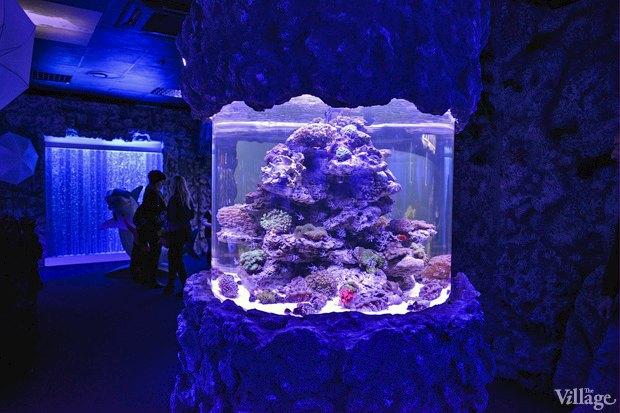 В «Детском мире» начал работать океанариум. Изображение № 6.