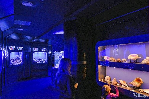 В «Детском мире» начал работать океанариум. Зображення № 5.