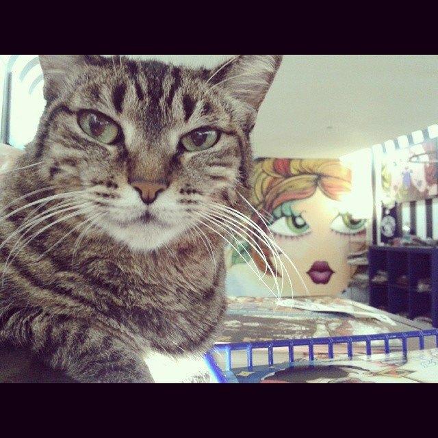 Музейные коты вснимках Instagram. Изображение № 4.