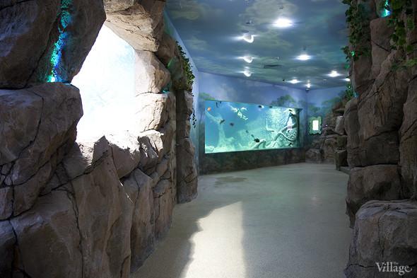 Первый океанариум открылся в Москве. Изображение № 2.