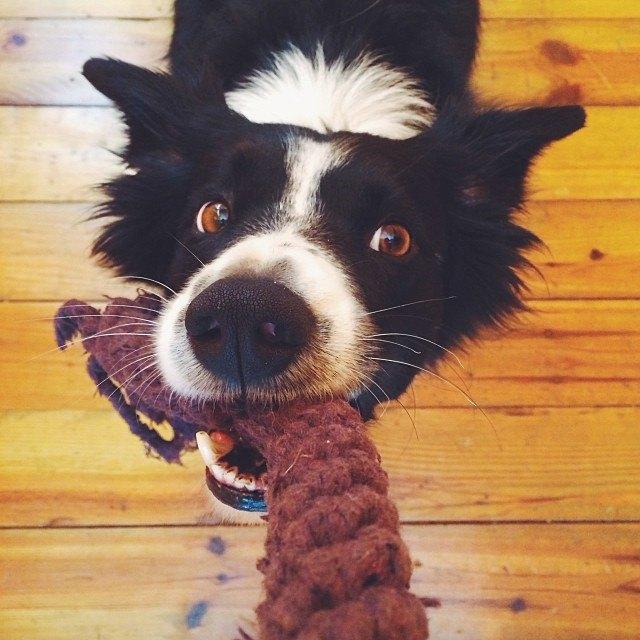 Лучшие страницы Instagram с животными: Часть 2. Изображение № 10.