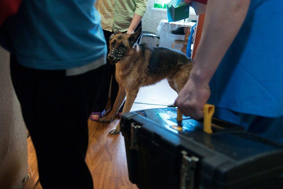 Всё не как улюдей: Какработает ветеринарная неотложка. Изображение № 6.