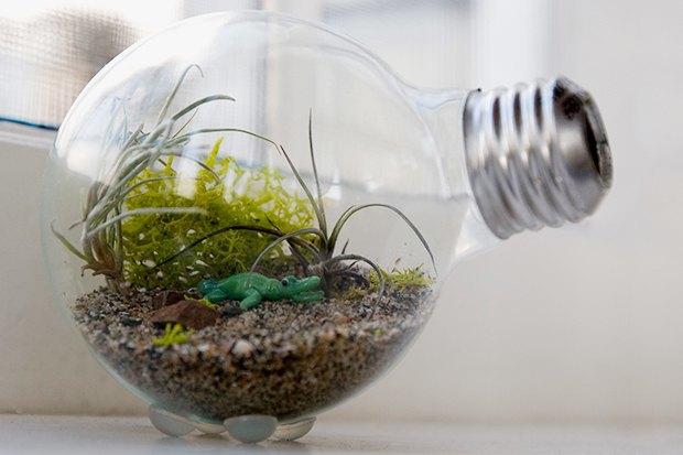 Воздушный цветок: Что делать с растением без корней. Изображение № 8.