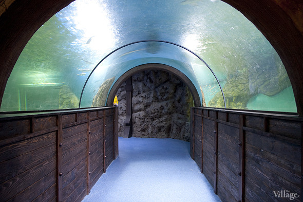 Первый океанариум открылся в Москве. Изображение № 1.