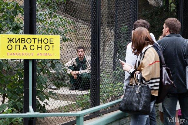 Директор московского зоопарка: «Погода была ужасной, всё выглядело очень грустно». Изображение № 4.