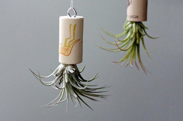 Воздушный цветок: Что делать с растением без корней. Изображение № 4.
