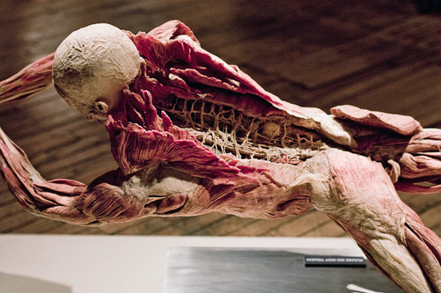 Спустили шкуру: В Киев привезут The Human Body Exhibition. Зображення № 3.