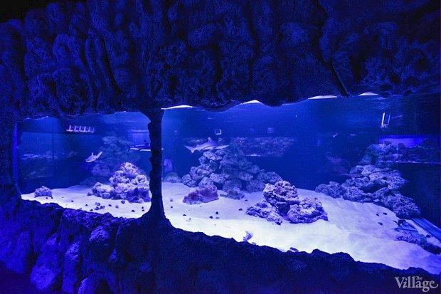 В «Детском мире» начал работать океанариум. Изображение № 9.
