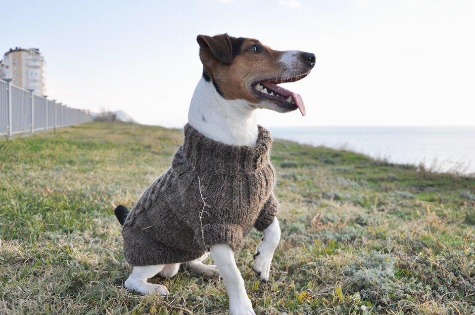 Как архитектор стала шить одежду для собак. Изображение № 3.