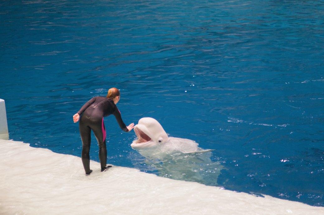 «Главные здесь — косатки, но самые милые — моржи»: На ВДНХ открылся океанариум. Изображение № 14.