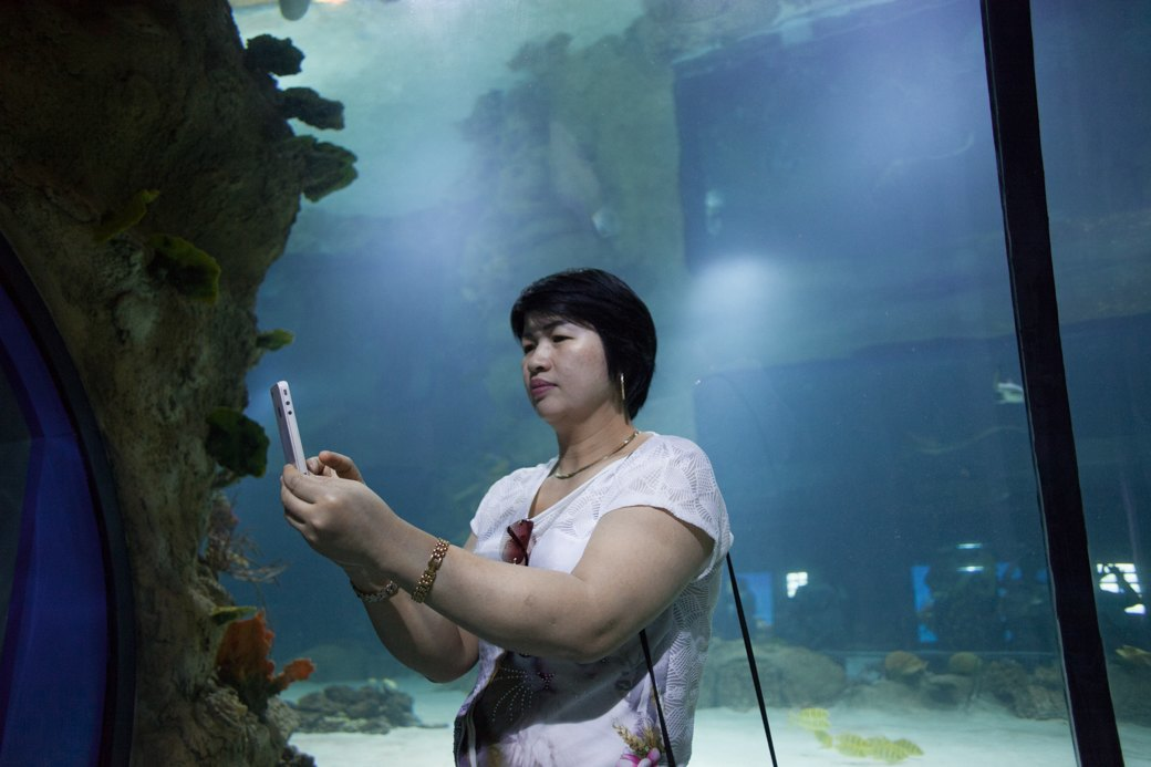 «Главные здесь — косатки, но самые милые — моржи»: На ВДНХ открылся океанариум. Изображение № 11.