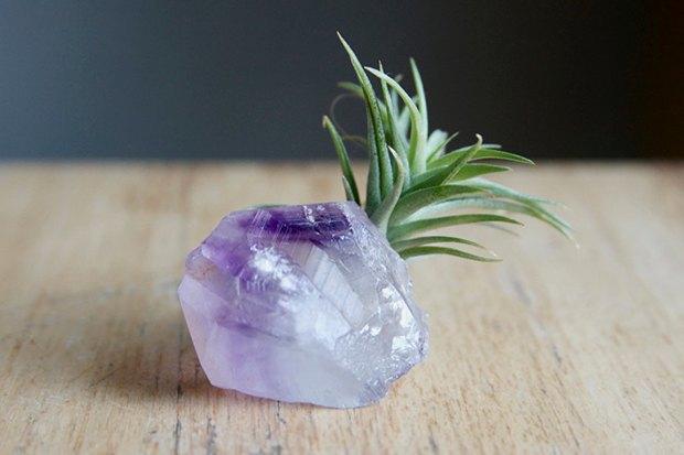 Воздушный цветок: Что делать с растением без корней. Изображение № 2.
