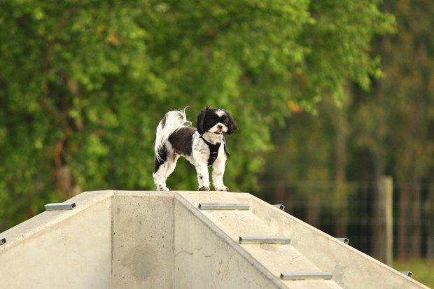 Иностранный опыт: Как устроены площадки для выгула собак в 5 городах мира. Изображение № 23.