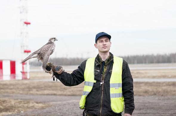 Также в комплект специального снаряжения входит соколиная перчатка и ремешки, которыми птица на время перемещения крепится в руке, — опутенки.. Изображение № 21.