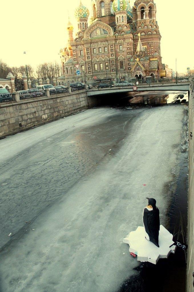 Пингвин вканале Грибоедова . Изображение № 3.