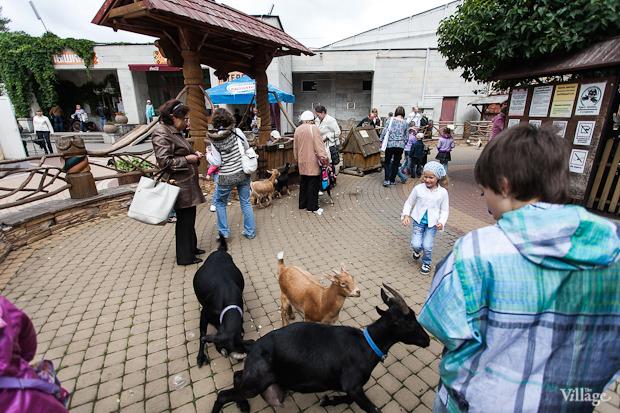 Как живёт и меняется Ленинградский зоопарк . Изображение № 37.