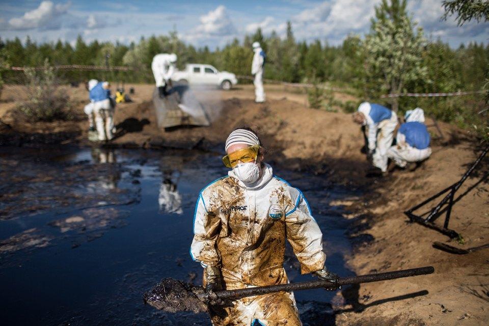 Как леса Коми очищают от нефти. Изображение № 33.