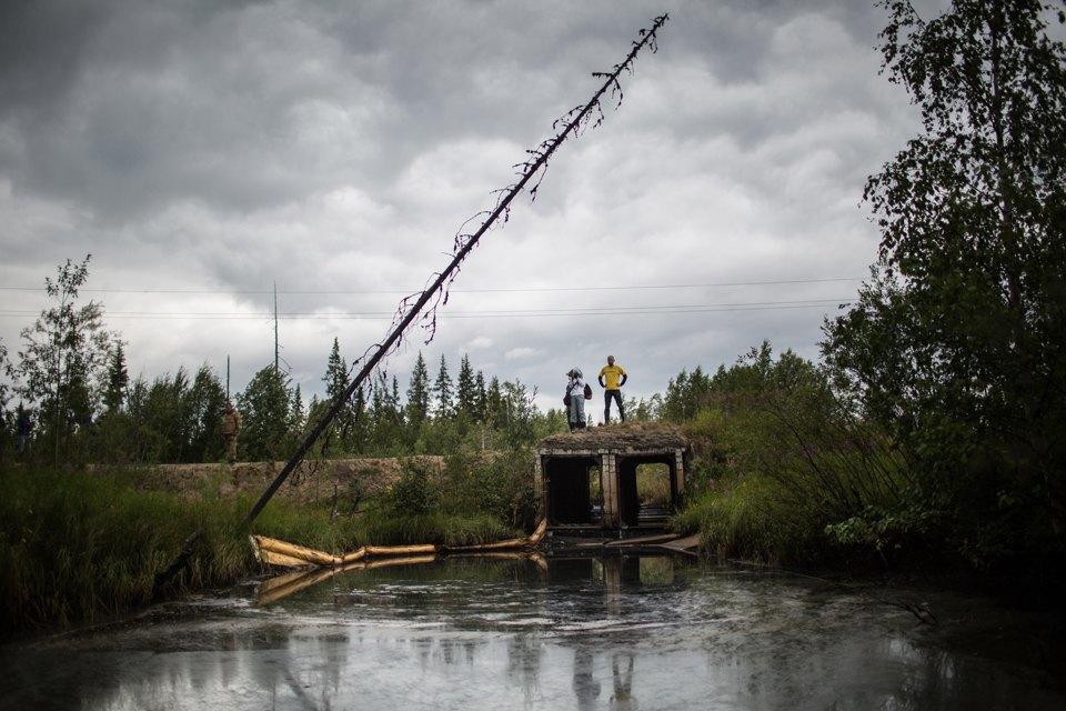 Как леса Коми очищают от нефти. Изображение № 19.