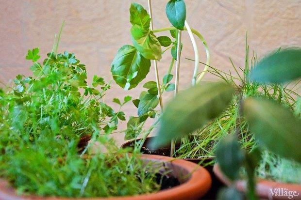 Сделай сад: Что киевляне выращивают у себя на балконах. Зображення № 21.