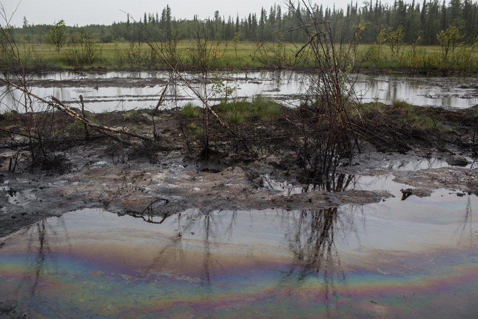 Как леса Коми очищают от нефти. Изображение № 22.