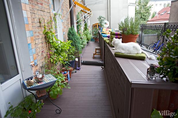 Где посадки: Что москвичи выращивают на балконе. Изображение №33.