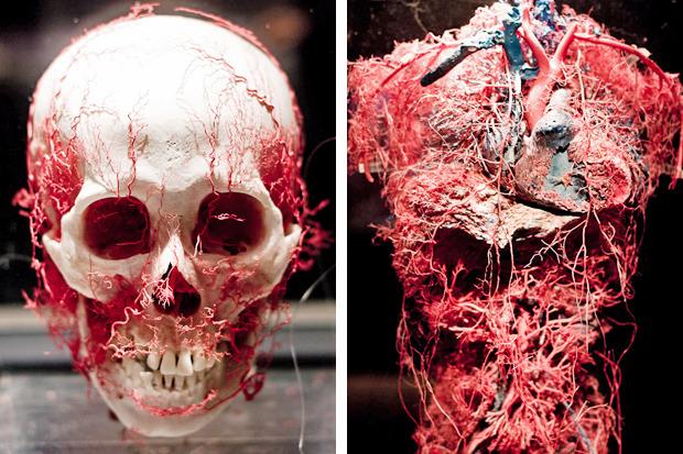 Спустили шкуру: В Киев привезут The Human Body Exhibition. Зображення № 4.