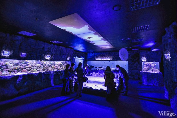 В «Детском мире» начал работать океанариум. Изображение № 10.