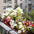 Где посадки: Что москвичи выращивают на балконе. Изображение №71.