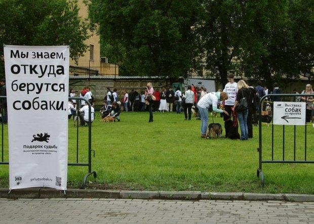 Выставка бездомных собак в Бауманском саду