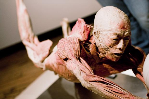 Спустили шкуру: В Киев привезут The Human Body Exhibition. Зображення № 5.
