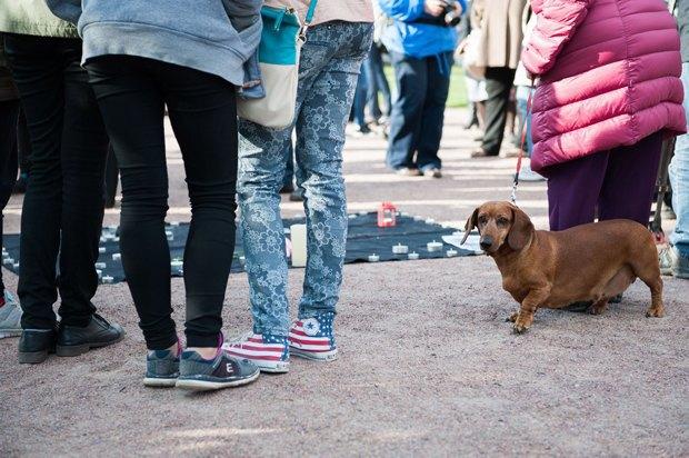 «Пустой поводок»: Как владельцы собак борются сэпидемией отравлений . Изображение № 5.