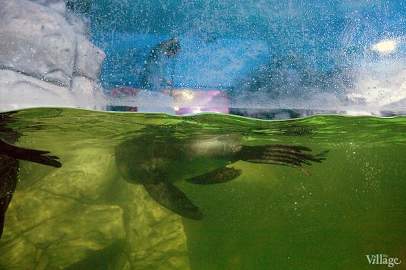Первый океанариум открылся в Москве. Изображение № 25.