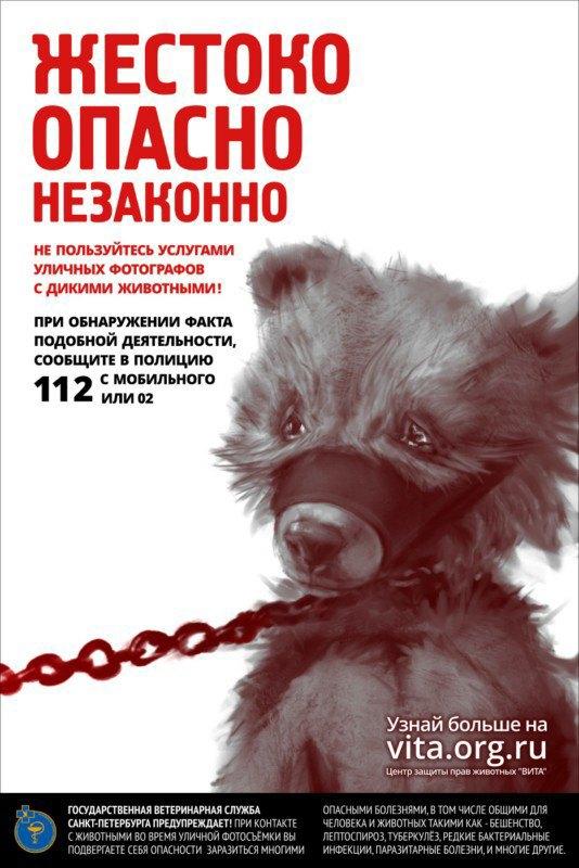 ВПетербурге появилась реклама против фотобизнеса надиких животных. Изображение № 1.