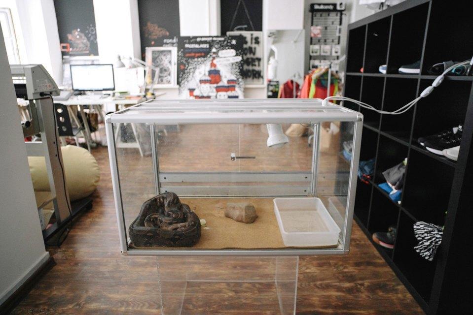 Удав Зина, кот Старки, рыба Крупская и другие животные в офисах. Изображение № 11.