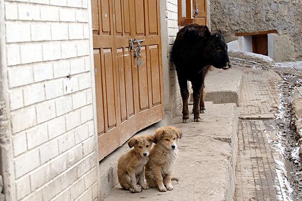 Иностранный опыт: Что делать сбездомными собаками. Изображение № 4.