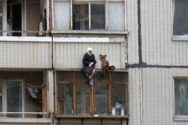 Упоротого лиса выставят в Петербурге. Изображение № 5.