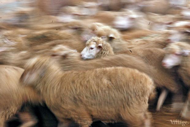 Новое место (Киев): Ресторан «Охота на овец». Изображение № 6.